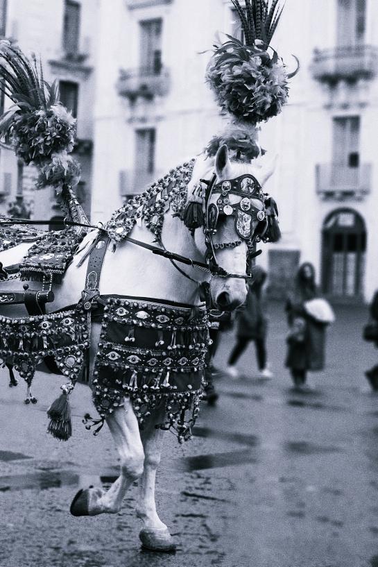 Catania horse costume